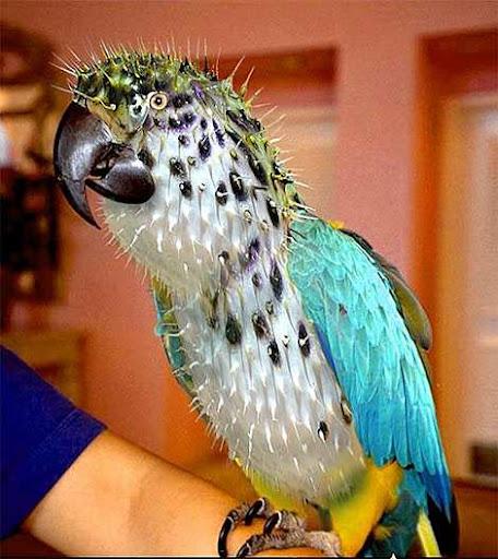 1014 3 226 2007 Amazing Photoshopped Animals Pics