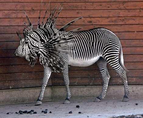 1014 4 226 2007 Amazing Photoshopped Animals Pics