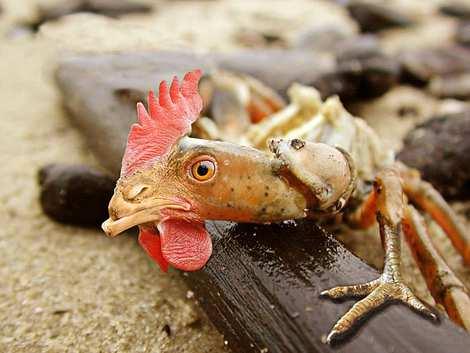 1014 34 226 2007 Amazing Photoshopped Animals Pics