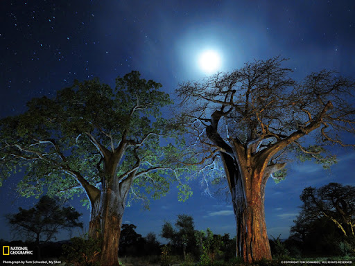 Baobab Trees Beautiful Landscape Photos