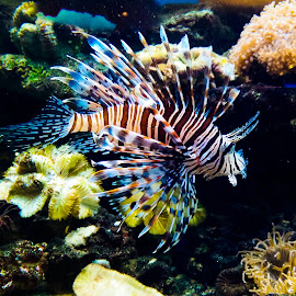 LionFish. by Phạm Công Tiến - Instagram & Mobile Android