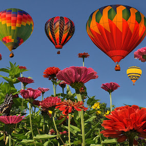 Carnival of Color by Corinne Noon - Digital Art Places ( photoshop art, zinnias, blue sky, colors, balloons )