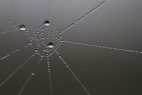 <p> line, space, shape</p>
