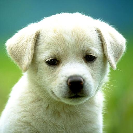 動物拼圖 LOGO-APP點子