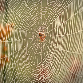 The Webs We Weave by Leslie Reagan - Nature Up Close Webs ( nature, spiderweb, spider, web )