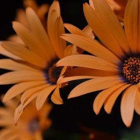 by Jolene Pierce - Flowers Flower Gardens