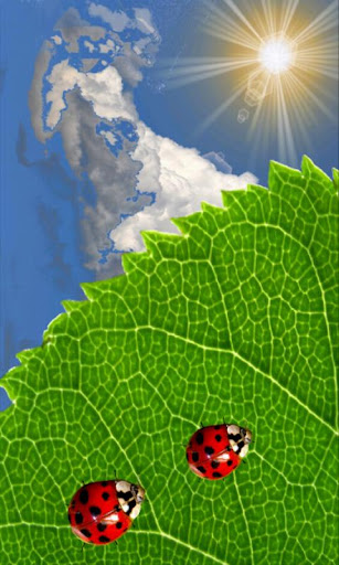 Ladybug and Leaf Wallpaper