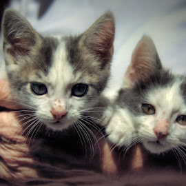 feral kittens, mexico by Jim Knoch - Animals - Cats Kittens