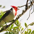 Biodiversity in Curitiba