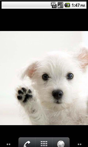 Dogs Best Live Wallpaper
