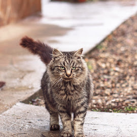 Zizi by Cosmin Marcu - Animals - Cats Portraits