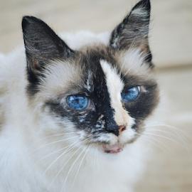 Moochi by Shannon Parsons  - Animals - Cats Portraits ( cat, moochi )