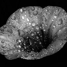 by JOEL Graphuchin - Black & White Flowers & Plants