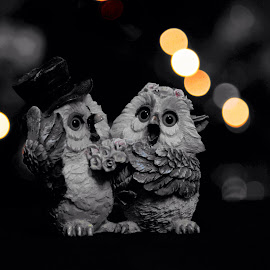 Búhos by Erick Castro Alvarado - Artistic Objects Other Objects ( amor, love, aves, pareja, owl, couple, búhos, birds )