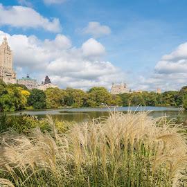 Mesmerising beauty. Central park NY by Tufail Syed - Landscapes Travel