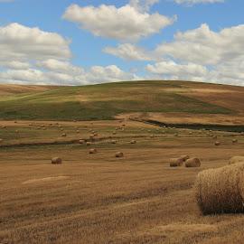 Hayroll Fields by Gabriel Gutierrez - Landscapes Prairies, Meadows & Fields ( oregon, hills, nature, hayrolls, fields )