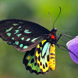 All a Flutter by Cindy Sumner-Moryl - Animals Insects & Spiders ( butterfly, macro, nature, colorful )