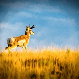 Antelope by Gayle Wilcox - Novices Only Wildlife ( monida, topaz, wildlife )