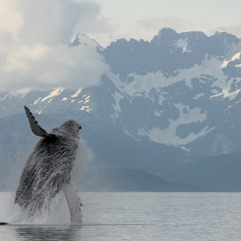 Alaska  by Adam Taylor - Novices Only Wildlife ( humpback, breach, alaska, juneau, scenic )