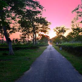 by Sadananda Saikia - Landscapes Sunsets & Sunrises ( path, nature, landscape )
