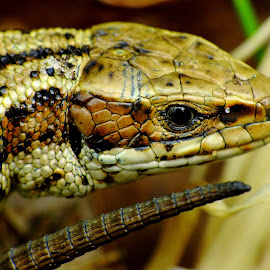 by Pat Somers - Animals Reptiles