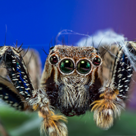 Came out victorios! by Dave Lerio - Animals Insects & Spiders ( jumping spider )