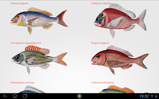 Screenshot of Fishes