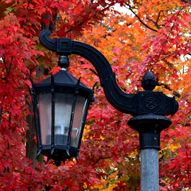 Fall Lamp Post by Marc Loranger - Landscapes Forests ( fall. colour. leaves. park. lamp post, fall, color, colorful, nature )