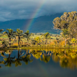 Take a Bow by Elmo Ensio - Landscapes Prairies, Meadows & Fields ( mountains, australia, trees, lake, rainbow,  )