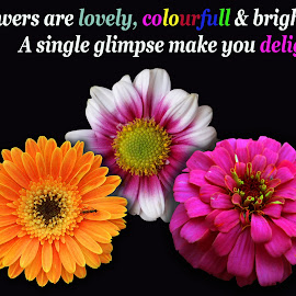 Flowers are.... by Asif Bora - Typography Quotes & Sentences