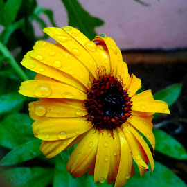 Water droplets on flower.. by Saumy Nagayach - Instagram & Mobile Other ( water, yellow, sun, flower, rain,  )