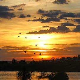 Sunset flying by Pramesh Shrivastava - Landscapes Sunsets & Sunrises ( golden hour, sunset, sunrise )
