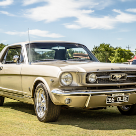 66 Mustang by Allyn Cooper - Transportation Automobiles ( mustang, pony, perth, 1966, cars, ford mustang, western australia )