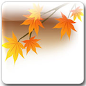 Maple Leaf Live Wallpaper Pro