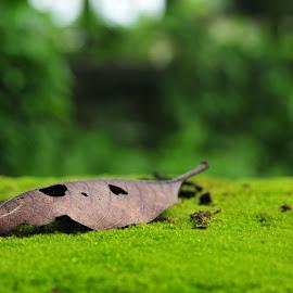 LIFE  by Mayur Gogoi - Nature Up Close Leaves & Grasses ( shades, life, leave, nature, art, air,  )