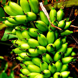 Pisang Moli by Wayan Sugita - Food & Drink Fruits & Vegetables