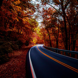 Red Fall by Ricardo Fox - Landscapes Forests ( red, start, color, fall, path, forest, road, woods, end )