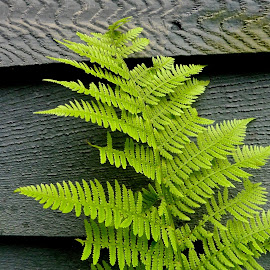 Ferns and Wood by Hunter Ten Broeck - Nature Up Close Other plants ( fern, gren, wood, texture, grain )