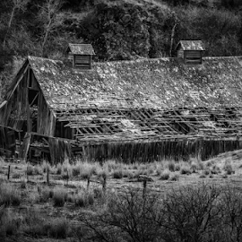 Barely Standing by Bob Juarez - Buildings & Architecture Decaying & Abandoned ( ranch, scrubland, barn, decay, abandoned )