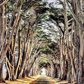 Tunnel of Trees by Lou Plummer - Instagram & Mobile iPhone ( photostream, iphone,  )