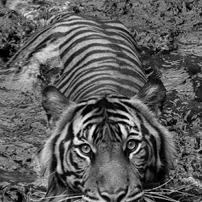 a closer look.. by Ubayoedin As Syam - Black & White Animals ( black and white, animal )