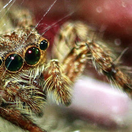 8 eyes by Agus Suhendra Suhendra - Novices Only Macro