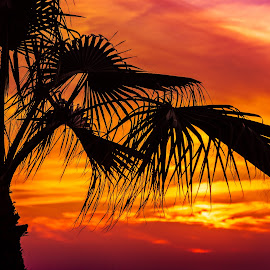 Sunset palmtree by John Georgiou - Landscapes Sunsets & Sunrises ( clouds, wind, colorful, travel, beach, sunlight, sun, holiday, sunset, sunny, sundown, summer, hot, palmtree,  )