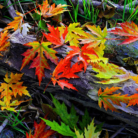 by Vernon Mata - Nature Up Close Leaves & Grasses ( fall leaves on ground, fall leaves, nature, colorful, color, fall )