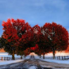 by Darlene Eastin - Landscapes Prairies, Meadows & Fields ( winter, snow, snowy )