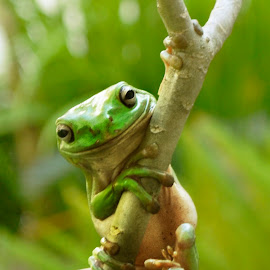 Smile For Me by Stella Jovita Wirawan - Animals Amphibians