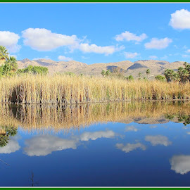 Agua Caliente Park by Sylvia Berman - Novices Only Landscapes ( water, reflection, desert, arizona, palm trees )