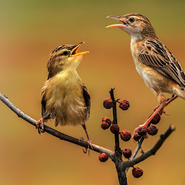 Discussion..... ? by Roy Husada - Animals Birds