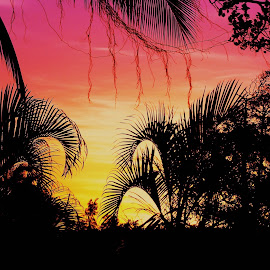 Tropical Cooktown Palm Trees by Chris KIELY - Nature Up Close Trees & Bushes ( palm, queensland, tree, sunset, australia, tropical, lines, cooktown )
