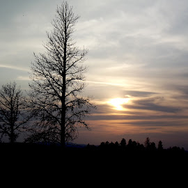 Spearfish, SD Sunset by Vicki Strickland - Novices Only Landscapes ( black hills, spearfish sd, silhouette, sunset, trees )